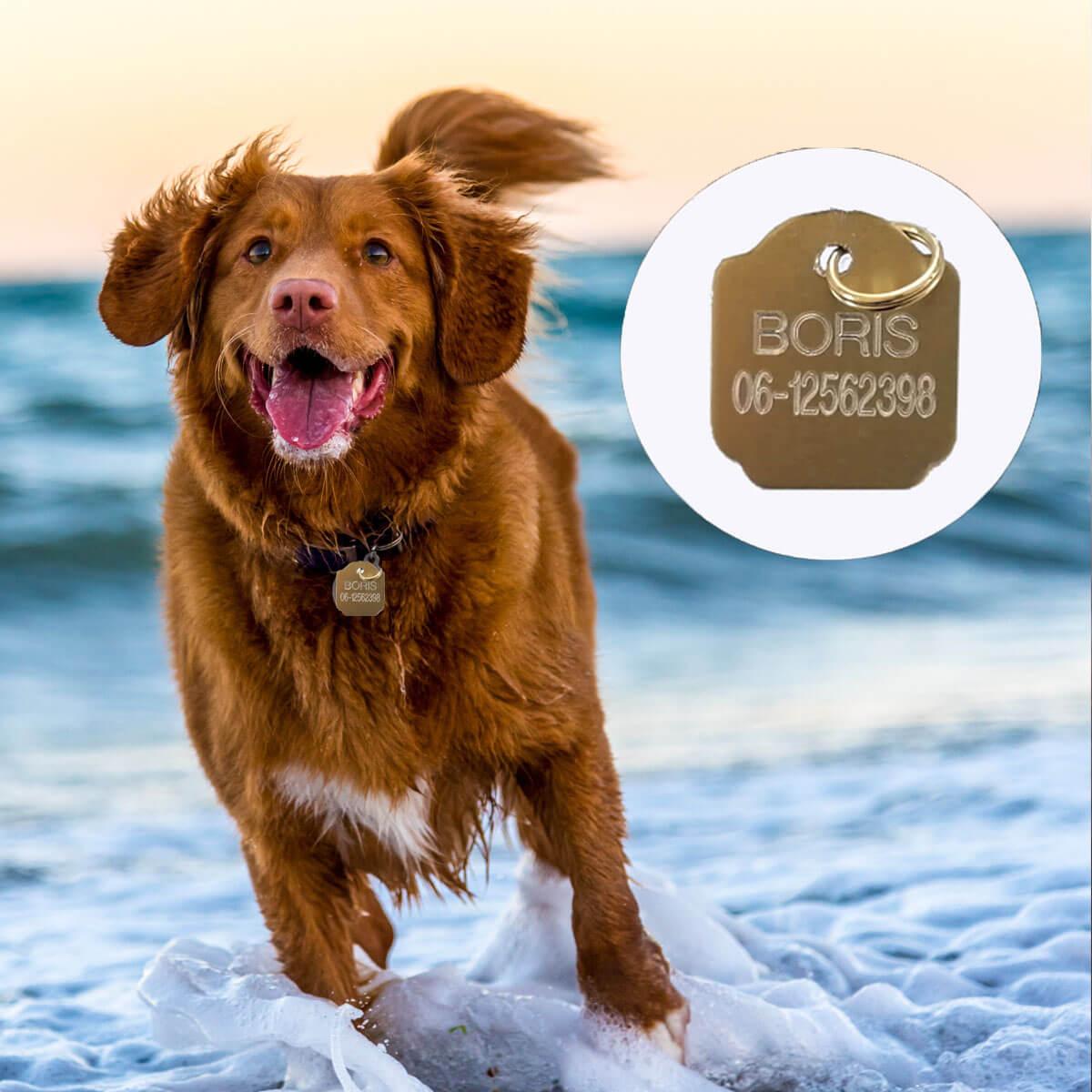 Dierenpenning voor honden en katten worden gratis gepersonaliseerd