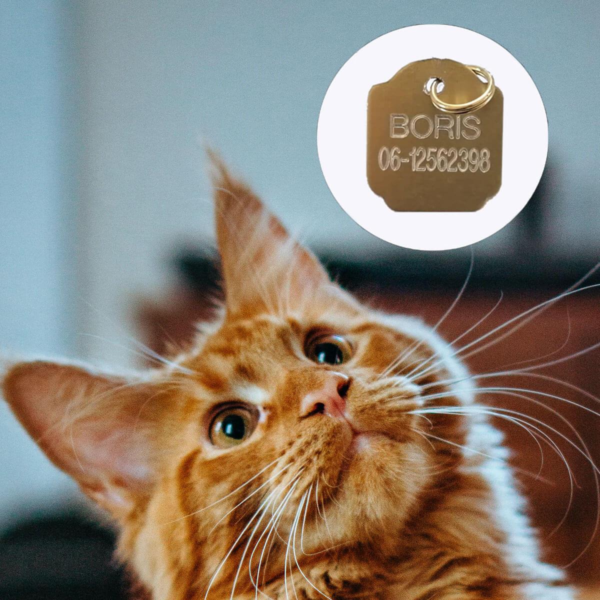 Penning bestellen, kleur: goud. Voor hond of kat.